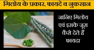 giloy ke fayde nuksan in hindi